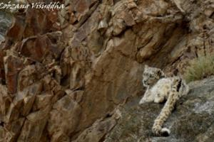 Wildlife in Ladakh
