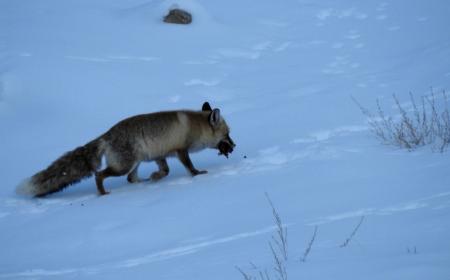 Wildlife in Ladakh