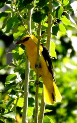 Birding Trips and Birding in Ladakh and  Wildlife Tours to Ladakh