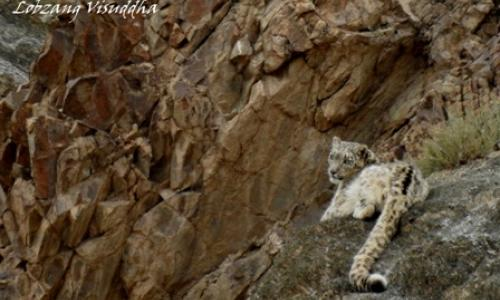 ladakh-wildlife-tour