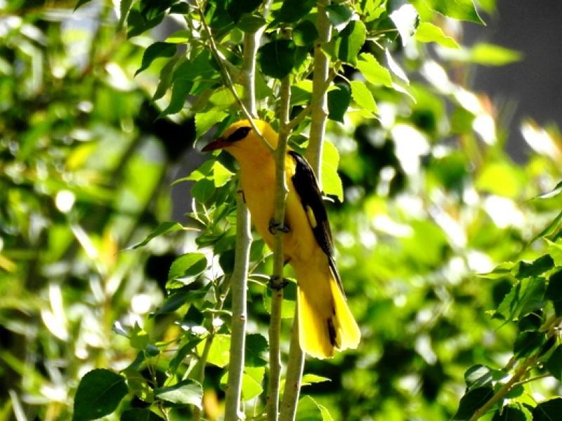 Birding Trips and Birding in Ladakh and  Wildlife Tours to Ladakh