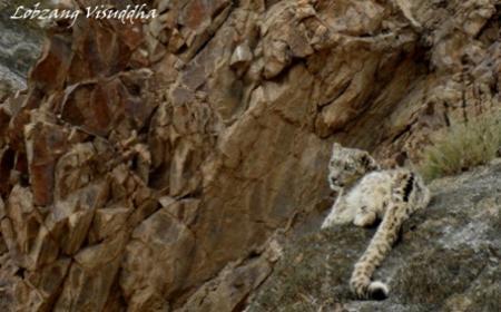 Mammals of Ladakh