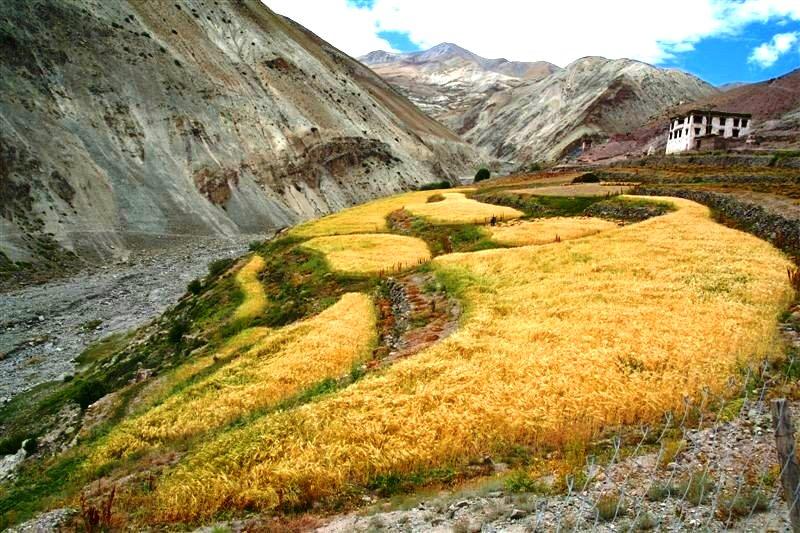 Yurutsey Homestay, Markha Valley Trek, Ladakh