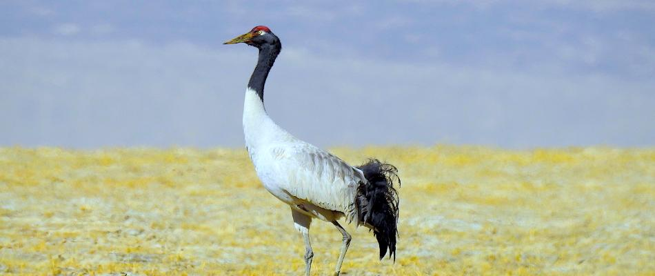 wildlife-tours-to-ladakh